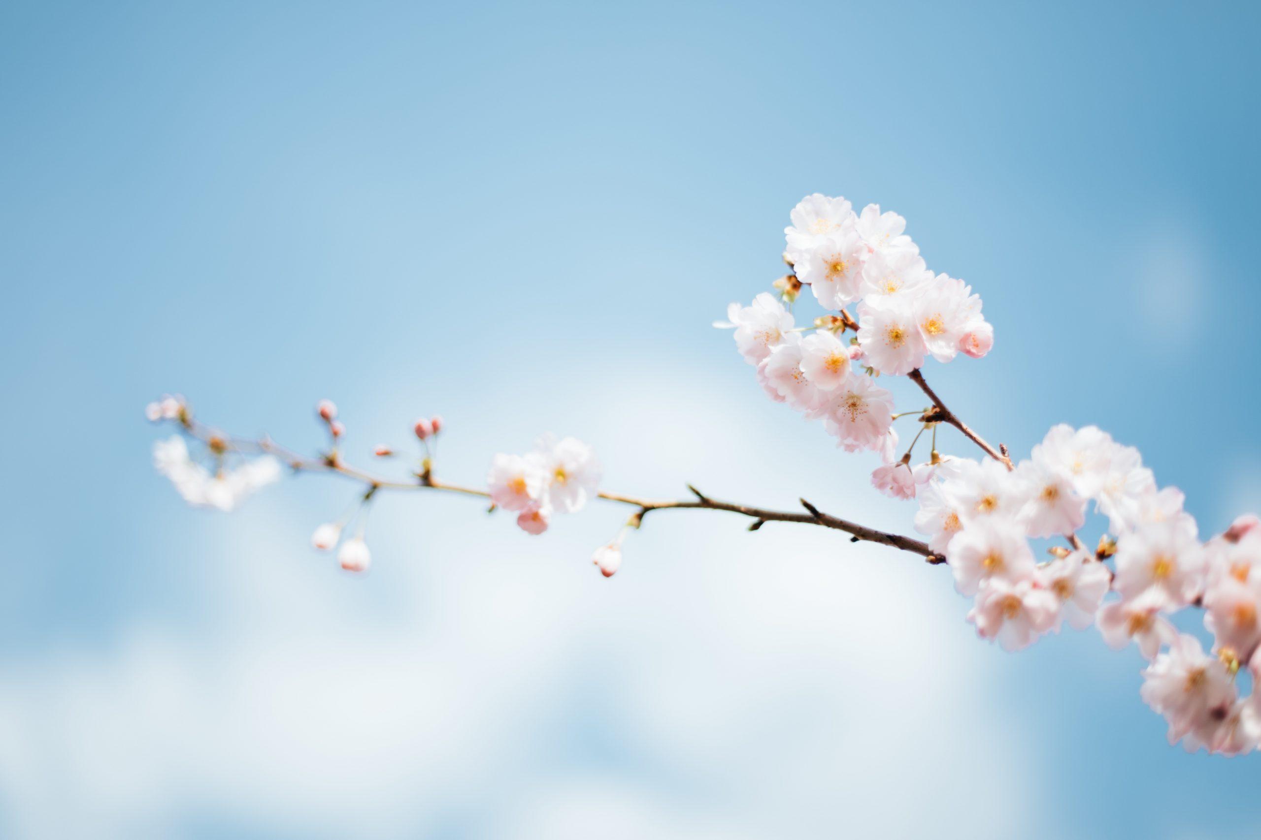 Fraulichkeit nachhaltige Veränderungen Gewohnheiten erfolgreich ändern innerer Frühling innere Jahreszeiten Phasen weiblicher Zyklus